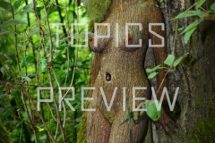 FeminineFantasy-Dryad-UNCENSORED-large